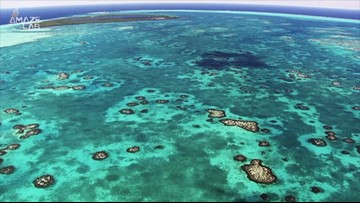 Have We Finally Solved The Riddle Of Coral Reef Halos?