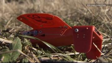 Watch NASA Release a Swarm of 100 Tiny Cicada Drones