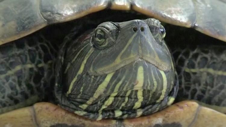 Turtle Disrupts Air Traffic at Japan's Narita Airport