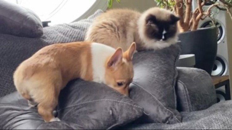 These Two Adorable Pets Enjoy an Unlikely Friendship During Quarantine