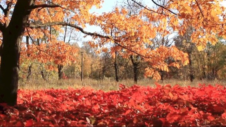 Did You Know That There's A 'Perfect' Fall Temperature?