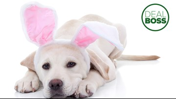 PetSmart is offering free Easter bunny photos this weekend, and these 12 dogs, cats and bunnies aren't sure how they feel about it