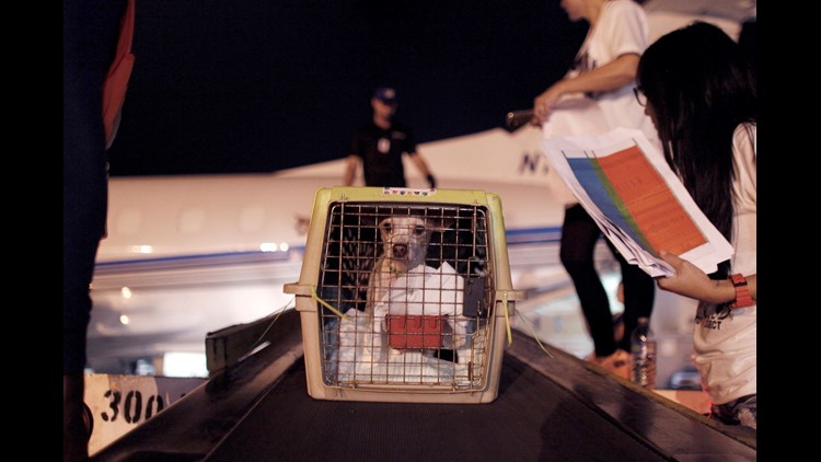 AP APTOPIX PUERTO RICO DOG AIRLIFT I PRI
