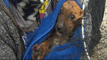 MLB pitcher, Ironman rescue puppies from sewer drain in north Houston