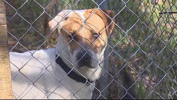 Texas lawmakers to vote on bill that would ban chains, define adequate shelter for tethered dogs