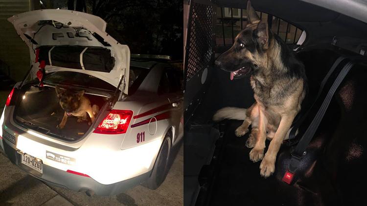 lost dog in cop car