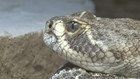Buckeye FD alerting residents after family finds rattlesnake inside pool noodle