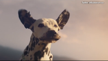 Budweiser's Super Bowl commercial is out with a message about the future