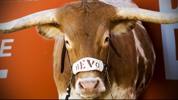 UT's Bevo graces Sports Illustrated's 'Greatest Mascots in College Football History' list