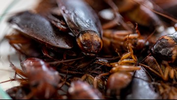 San Antonio Zoo will feed animals a cockroach named after your ex