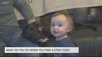What you need to know before you take in a stray dog in Smith County.