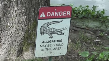 Alligators spotted in East Texas