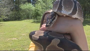 Severe weather brings increase of snake sightings in East Texas