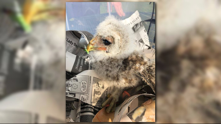 East Texas firefighters save baby owl who fell out of tree
