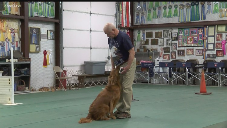 TOTALLY EAST TEXAS: Mineola Golden Retriever named 'Top Dog', earns national award for obedience