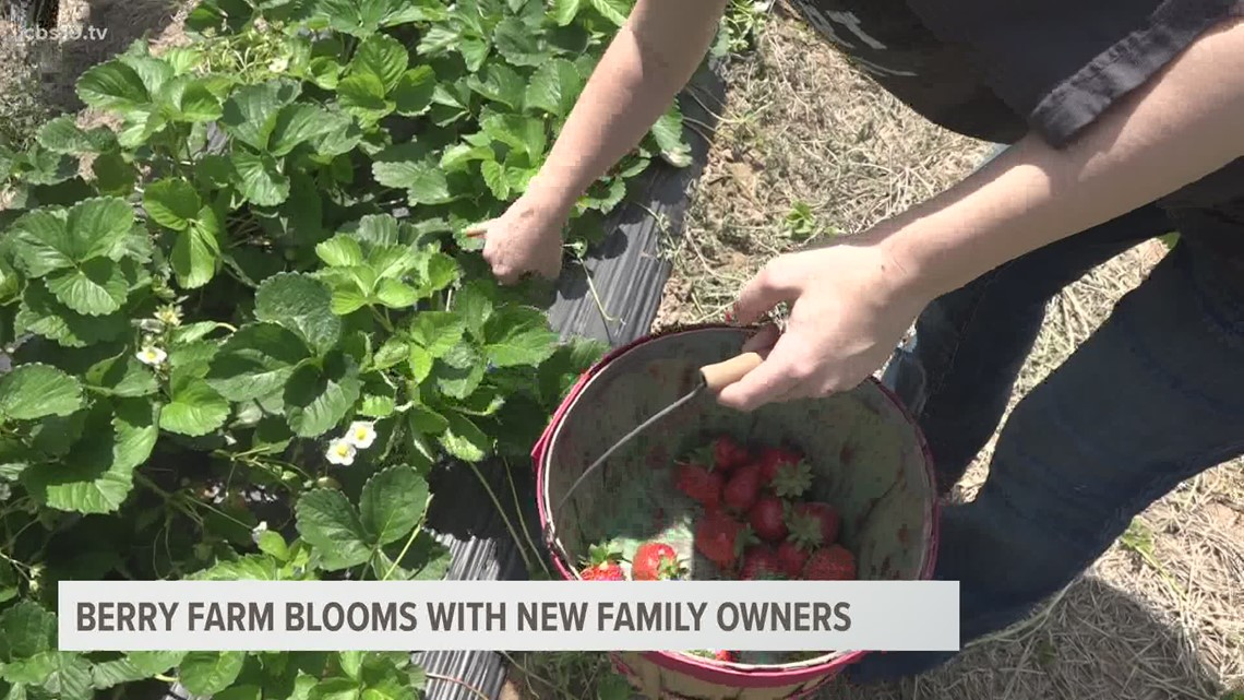 Berry farm blooms with new family ownership