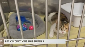Vets encourage owners to check on summer vaccinations