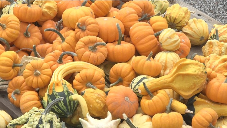 Pumpkin patches are popping up across East Texas
