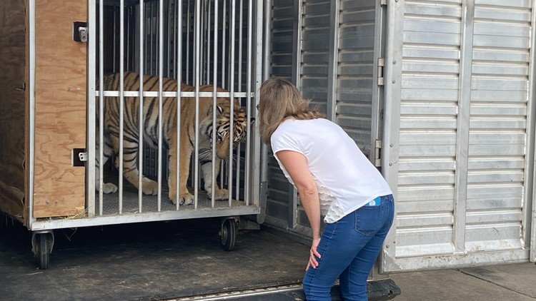 Tiger seen in Houston taken to new home in Henderson County