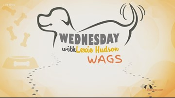 Wednesday Wags: Mango