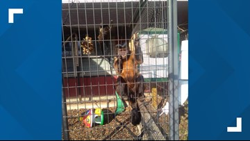 Private zoo in Mineola to close after recent break-in that released monkey
