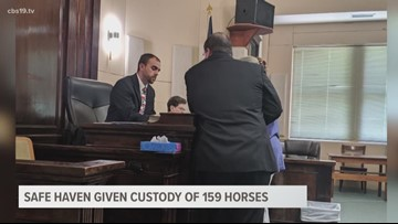Safe Haven Equine Rescue given custody of 159 rescued horses in Camp County Court ruling