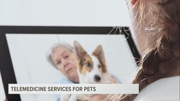 Local veterinary clinic offering telemedicine for pets amid COVID-19