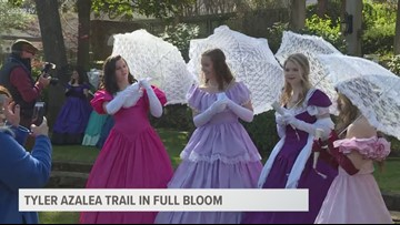 Tyler's Azalea Trails and Azalea Belles in full bloom