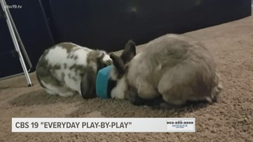 Everyday Play-by-Play: Chickens, bunnies and bikes