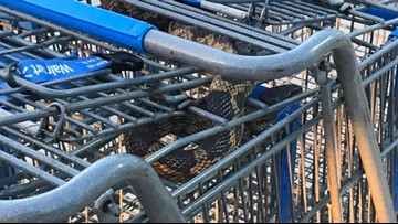 Northeast Police officer finds snake in Walmart shopping cart