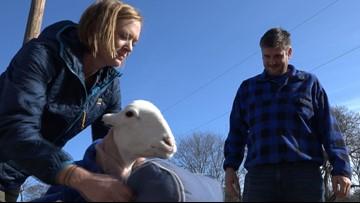 'It's the life we've chosen' Couple dedicates life to saving unadoptable farm animals