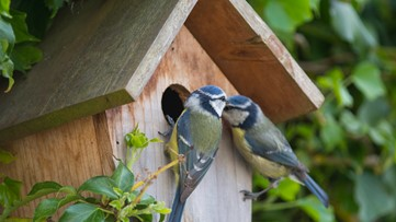 Bird-watching soars amid COVID-19 as Americans head outdoors