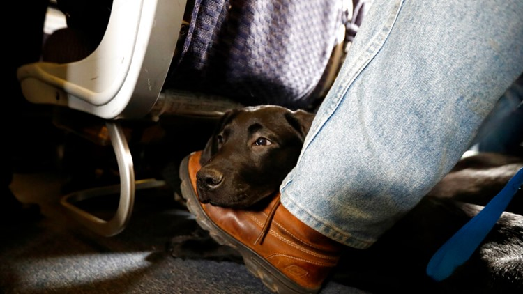 American Airlines is grounding emotional-support animals