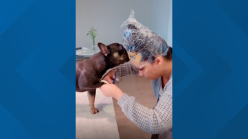 Have trouble getting your dog to stay still to cut their nails? Try this TikTok trend that is all but guaranteed to work