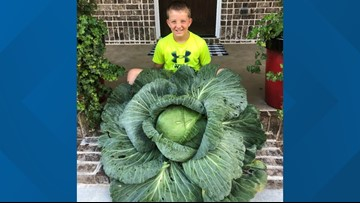 Georgia student's cabbage wins him $1K scholarship
