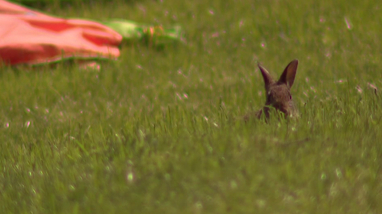 New confirmed case of Rabbit Hemorrhagic Disease in Texas, first of 2021