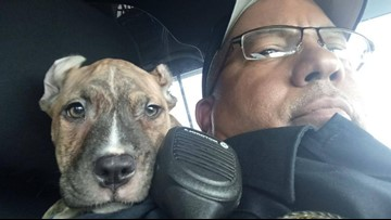 Florida officer rescues puppy ahead of Hurricane Dorian, names her 'Dory'