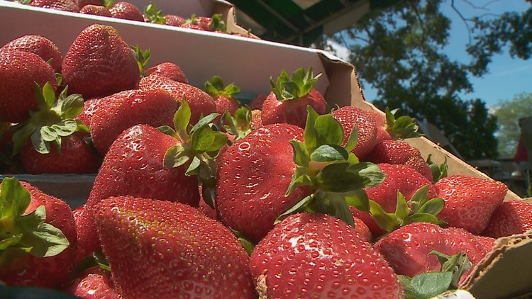 VERIFY: Yes, worms can live in your strawberries – but it's rare
